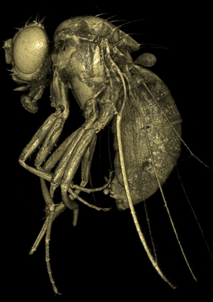 Fly Body1
